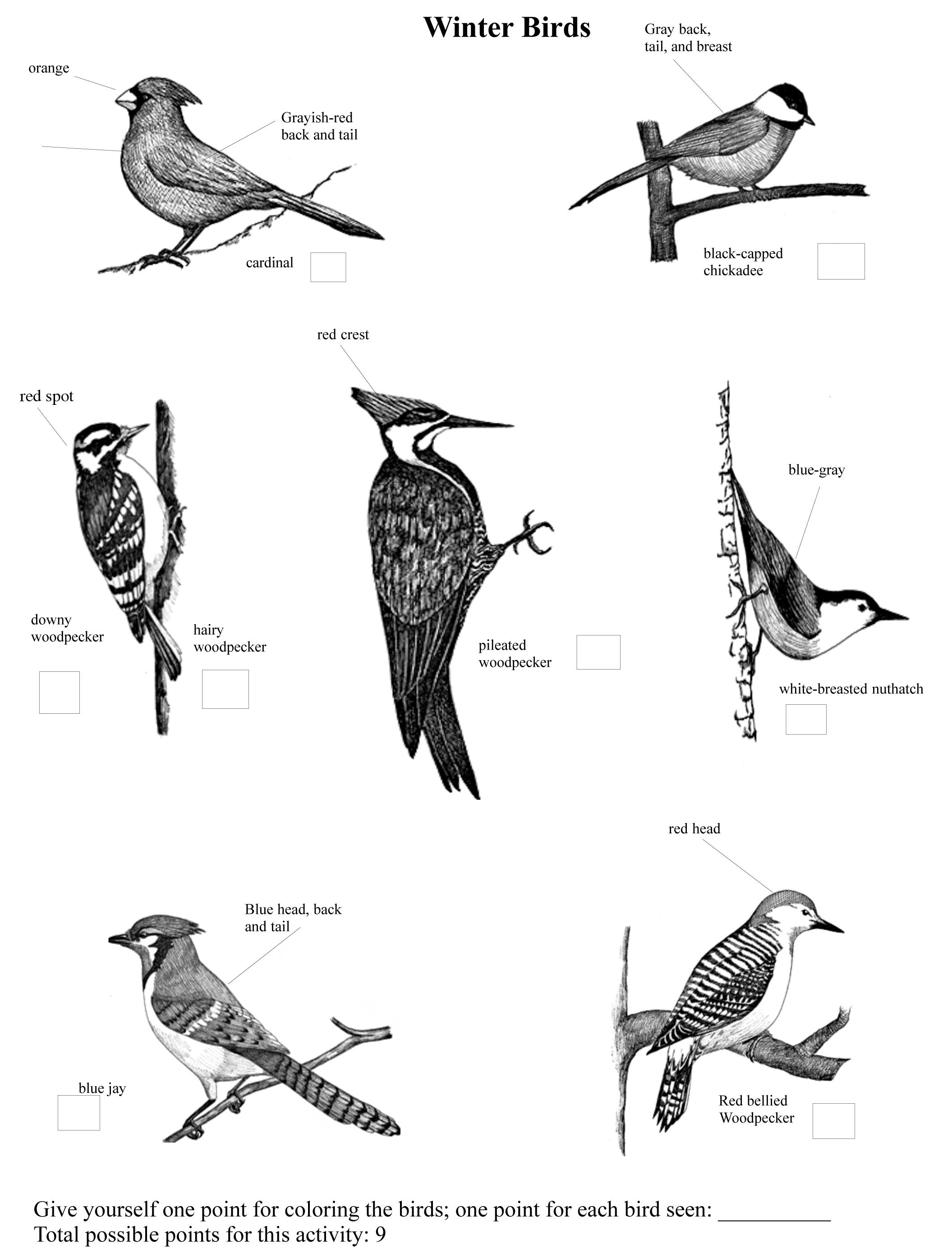 winter birds the old naturalist