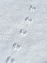 Mouse Tracks with tail drag