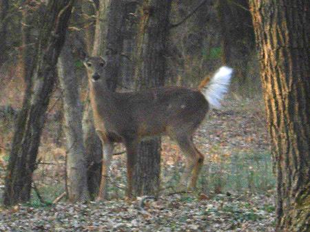 DeerFlag2Wade