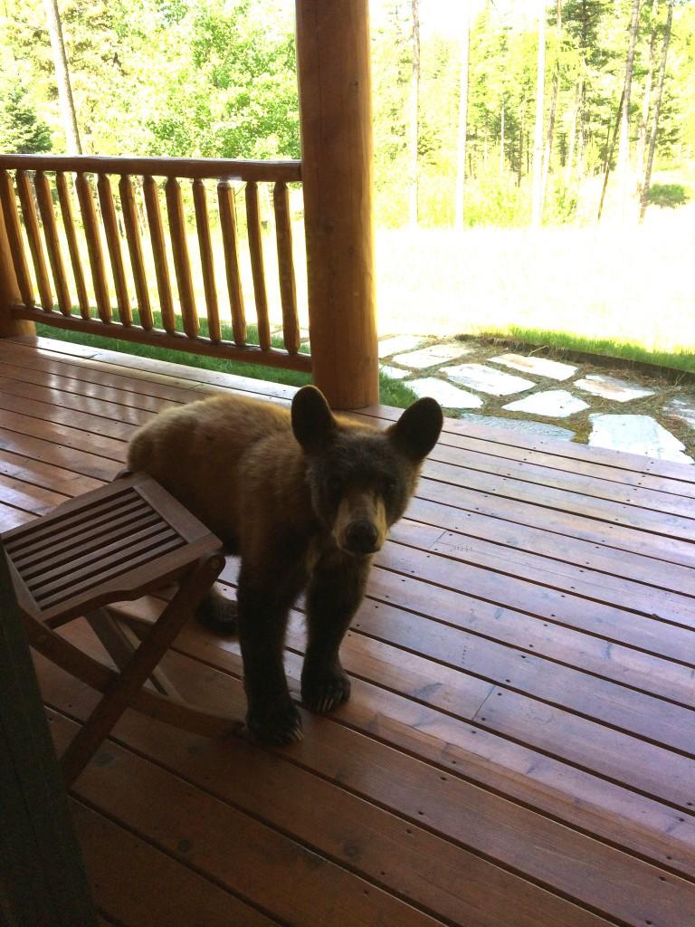 Yogi Bear on the Deck - Susan O'Donnell