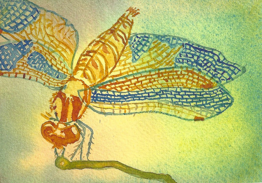 PatriciaDragonflies 1