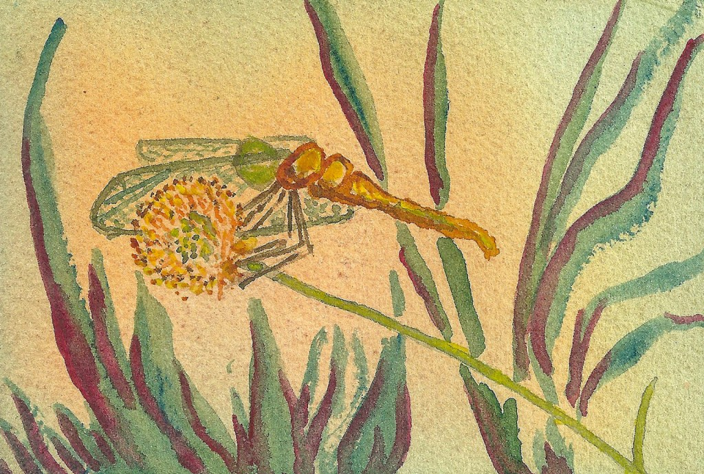 PatriciaDragonflies3