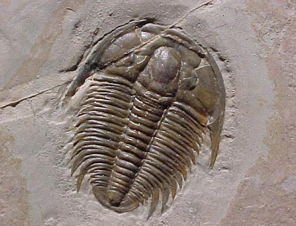 http://ledgardjespsonarchaeologyrebrand.blogspot.com
