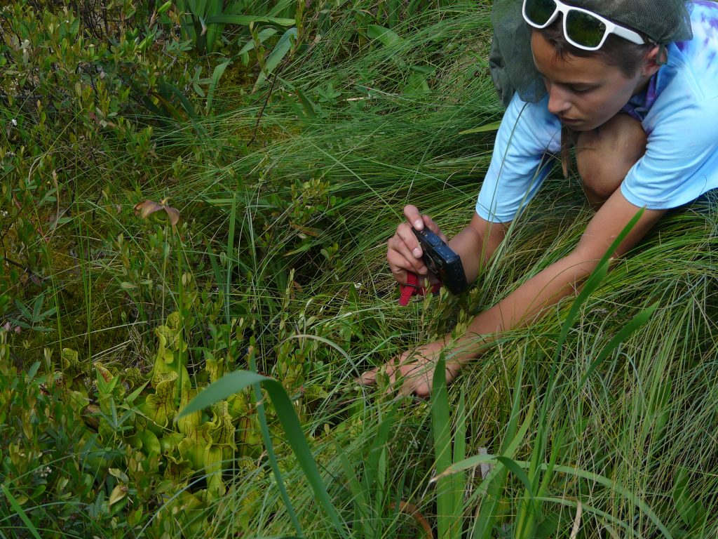 Jessie Kurus photographing a Pitcher plant