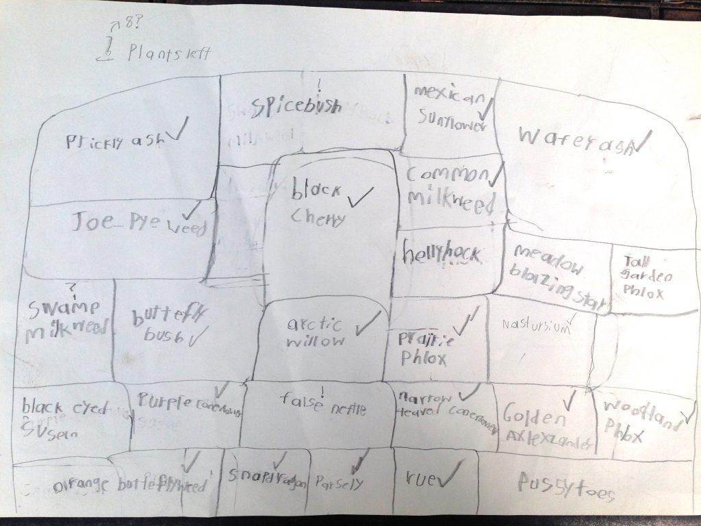Felix's original butterfly garden plan